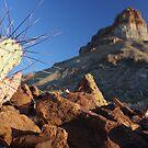 Castallon Cactus by Lacy O.