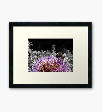 Busy Little Thistle Bee Framed Print