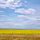 Canola Field by CarolM