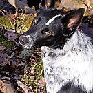 Peanut The Australian Dog by Karen Kaleta