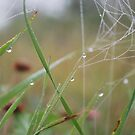 Dew by AylaM
