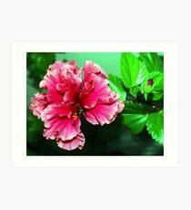 Deep pink double hibiscus Art Print