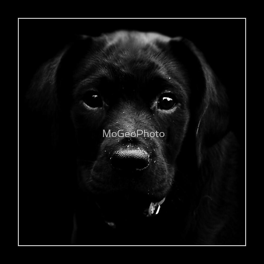 Guinness  by MoGeoPhoto
