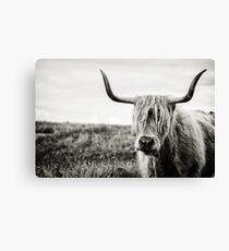 Highland Cow Canvas Print