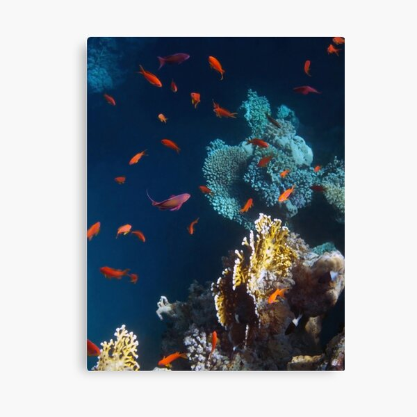 Colorful and Beautiful Sealife photography Canvas Print