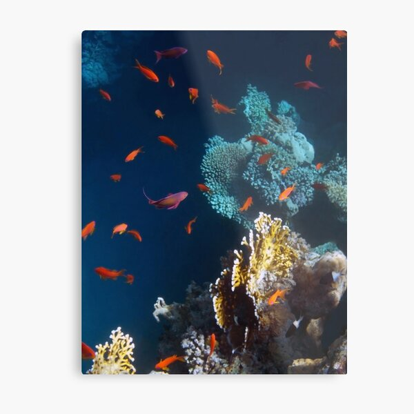 Colorful and Beautiful Sealife photography Metal Print
