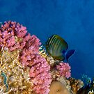 Adorable And Beautiful Red Sea Sealife And Coral Reef by hurmerinta
