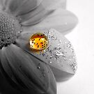 Glitter Ball by CinB