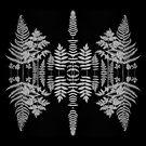 Silver Leaf Symmetry by Alyson Fennell