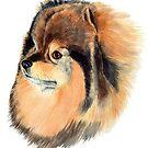 Pomeranian 1fv by doggyshop