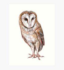 Barn owl drawing Art Print