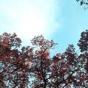 Red leaves against the blue sky by SooperYela