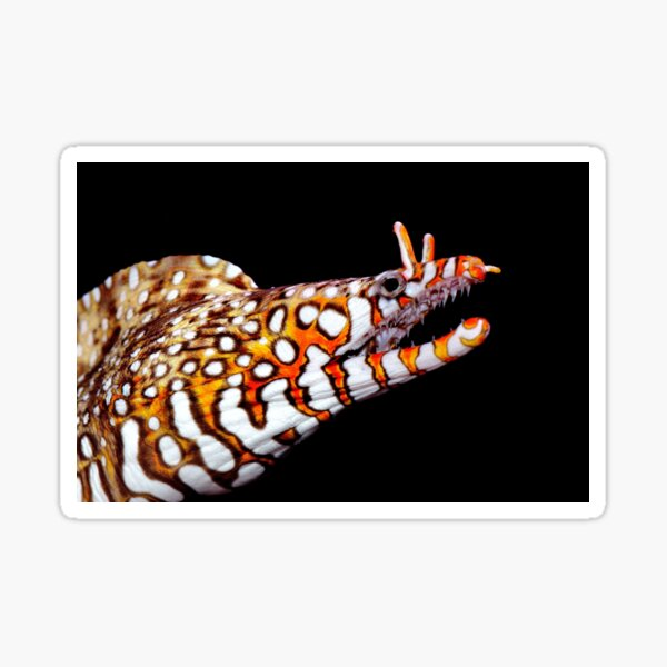 Dragon Eel Sticker