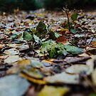 November by Valerie Rosen