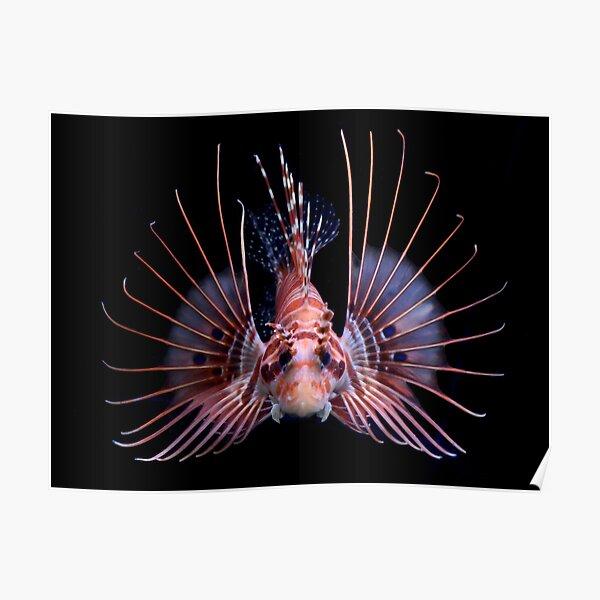Lionfish Poster