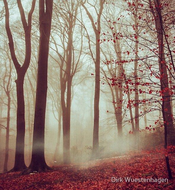 Late Autumn Forest by Dirk Wuestenhagen