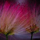Portuguese flower!... by sendao