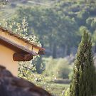 tuscan roofs by linelight