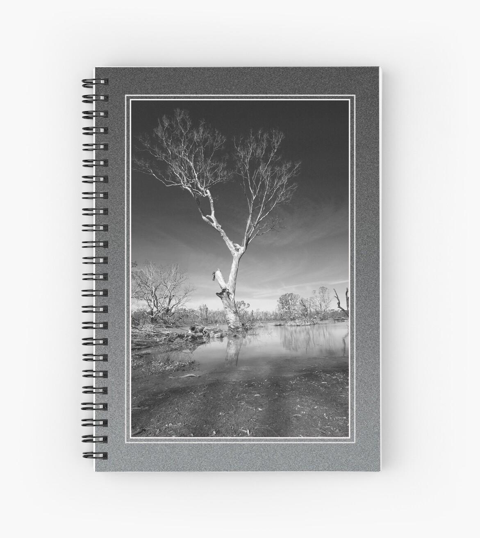 Solitary Tree by boydmace