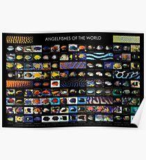 Angelfishes der Welt Poster
