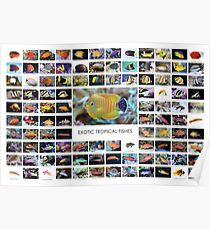 Exotische tropische Fische Poster