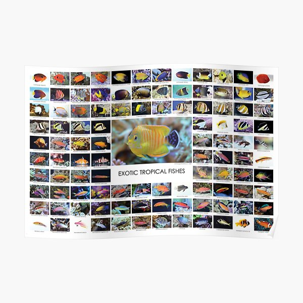 Exotic Tropical Fishes Poster