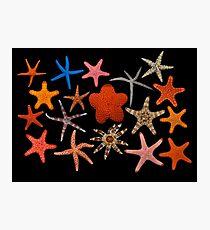 Starfishes Photographic Print
