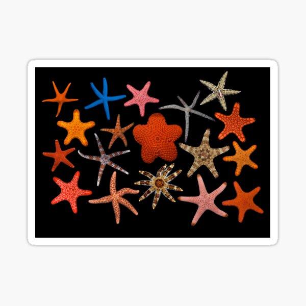 Starfishes Sticker