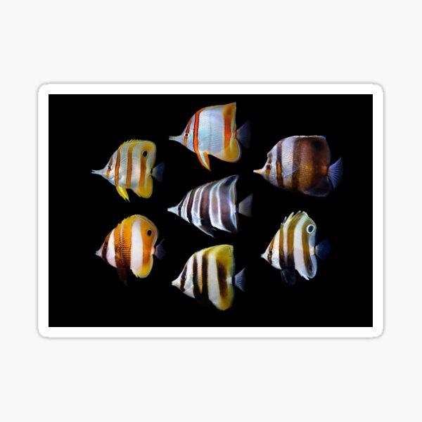 Butterflyfishes 1 Sticker