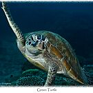 Green Turtle by Ross Gudgeon