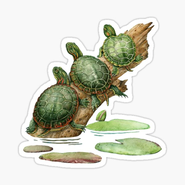 Painted Turtles Sticker
