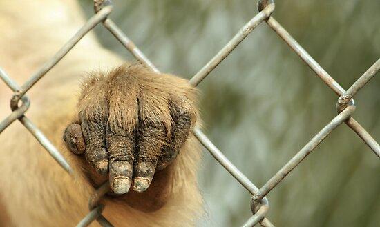 Let me out please....... by Susanne Correa