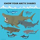 Know Your Arctic Sharks by PepomintNarwhal