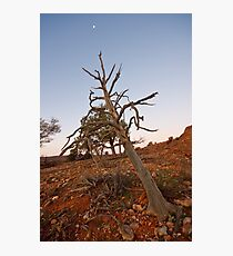 Old tree at Mutawintji Photographic Print