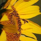 Pollen For Feet by laureenr