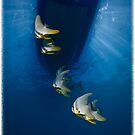 Batfish Under Our Boat (Calendar Version) by Ross Gudgeon