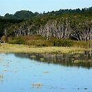 Tallow Creek by byronbackyard