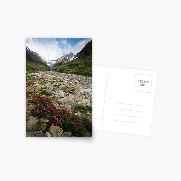 Flowers of High Altitudes Postcard