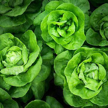 Hellgrüner frischer französischer Salat! von drubdrub