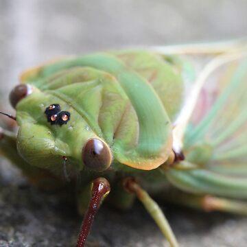 Australian Cicada by jaxfae