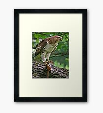 Guess Who's Coming To Dinner   Framed Print