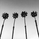 Black and White California Palm Trees by AlexandraStr