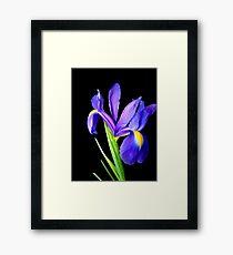 Single flower. Framed Print