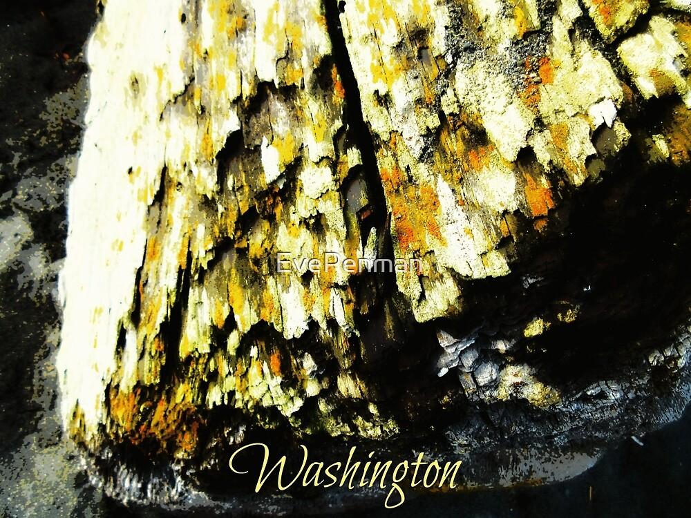 Washington Wood by EvePenman