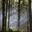 Smoke in the Trees 2 by Michael Garson
