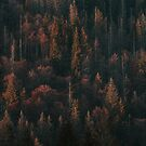 Autumn Trees - Landscape and Nature Photography by ewkaphoto