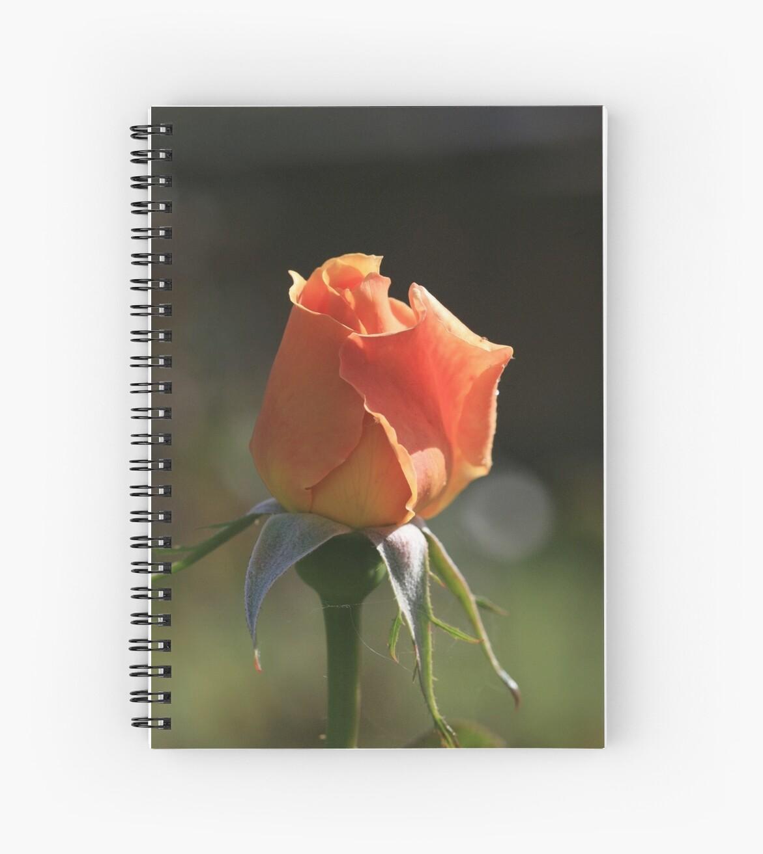 A Rose For Mum by saharabelle