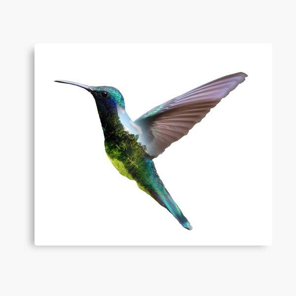 mockingjay bird Canvas Print