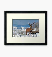 Deer-Stag Framed Print