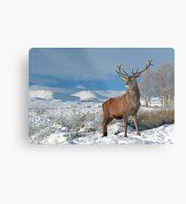 Deer-Stag Metal Print